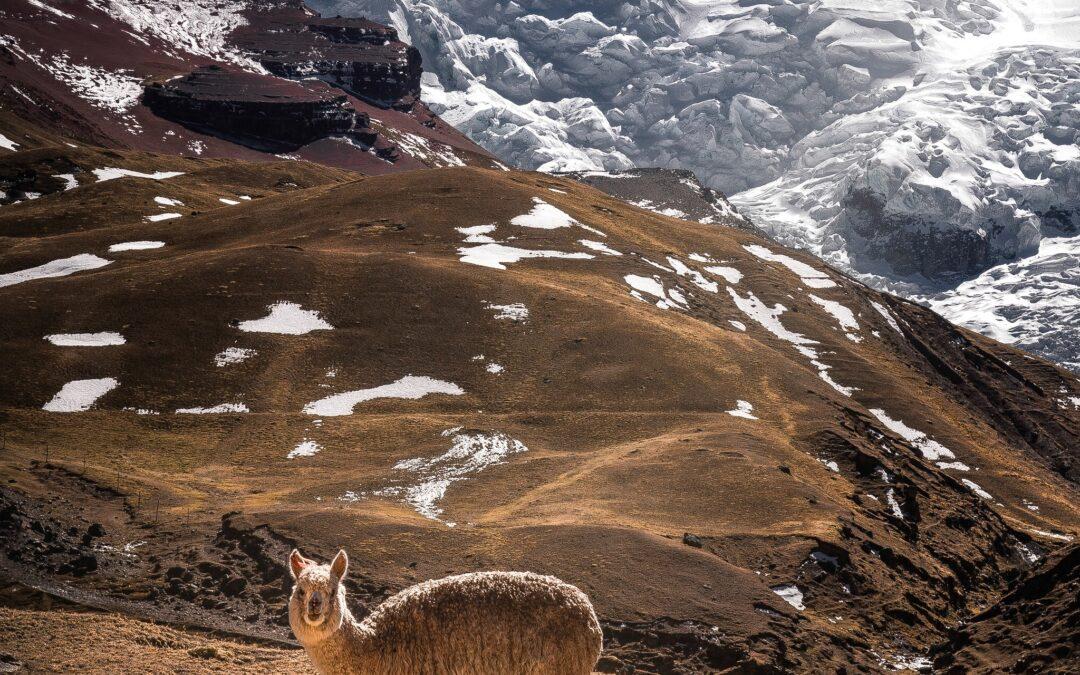 Alpaca: Sustainable Materials