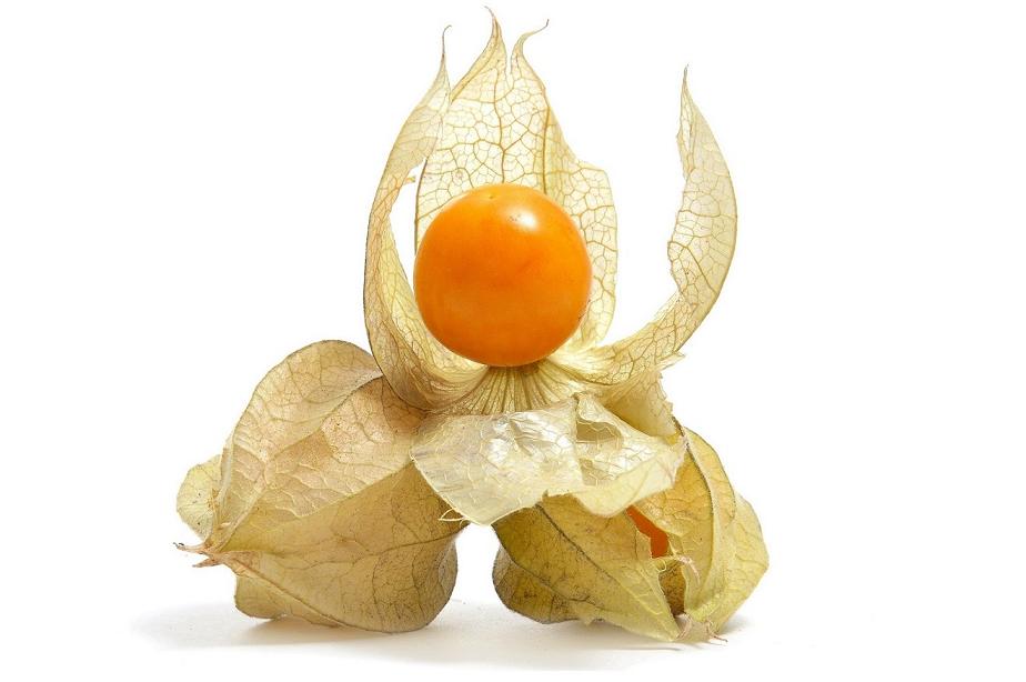 Goldenberry2